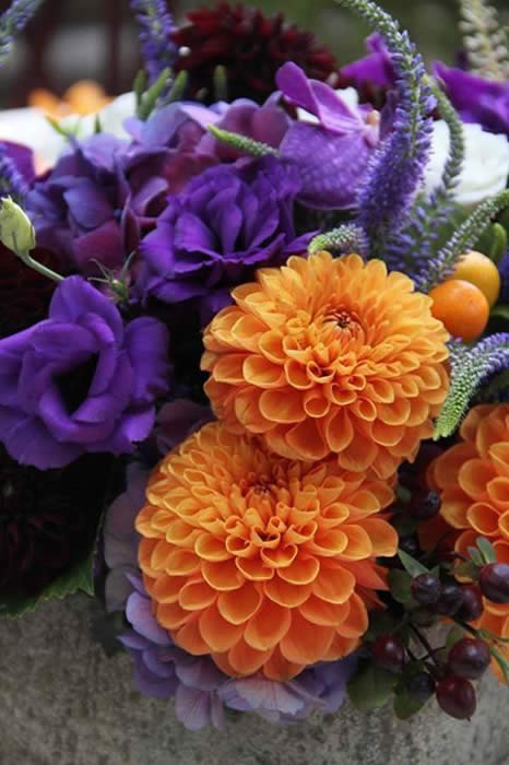 Photo: Stunning orange and purple flowers a favorite on Pinterest. Are they a favorite with you?
