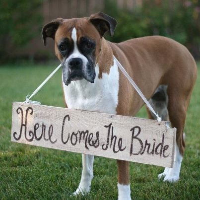 "Photo: Hot on Pinterest: The cutest ""Here comes the bride"" announcer we"